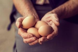 Job_Fair_for_Global_Egg_in_Elmira_Ontario.jpg